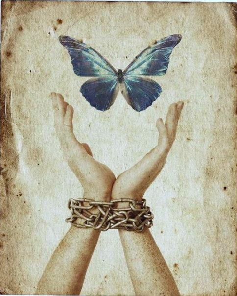 farfalla-catena